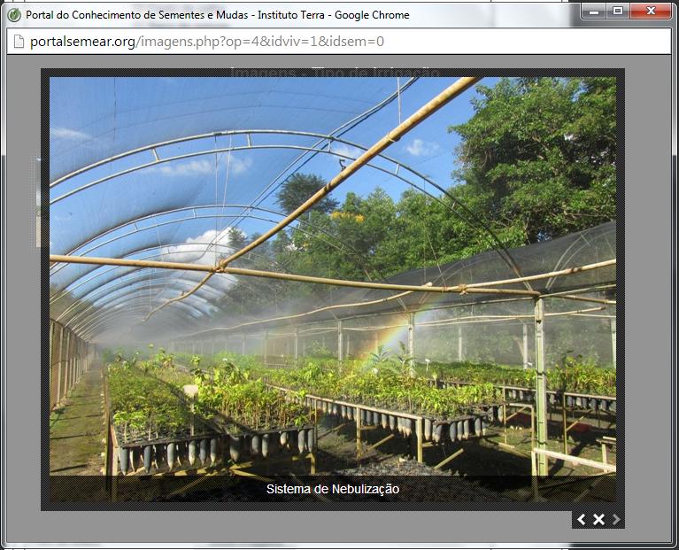 Tela de amostra de imagem visualizada através do navegado.